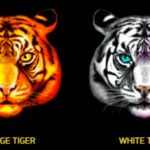 Chinese Tigers Online Slot Tigers Symbol